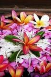 Mooie tropische bloemen stock foto's