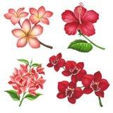 Mooie tropische bloemen op een witte achtergrond Binnen gedaane schets Royalty-vrije Stock Fotografie