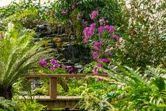 Mooie tropische installaties en bloemen in de Botanische Tuin van Sirikit royalty-vrije stock foto's