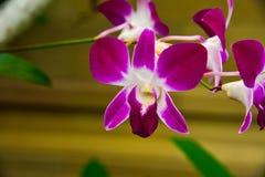 Mooie tropische kleurrijke bloem in regenwoudwildernis in Oost-Azië royalty-vrije stock foto's