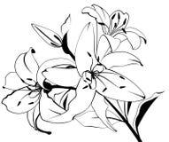 Mooie tropische lillies vector illustratie