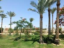 Mooie tropische palmen en delonix bomen met rode bloemen in openlucht op vakantie, tropische, zuidelijke, warme toevlucht unde Royalty-vrije Stock Foto