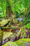 Mooie tropische regenwoud en stroom in diep bos, royalty-vrije stock fotografie