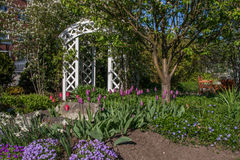 Mooie tuin Stock Afbeelding