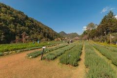 Mooie tuin, de tuin van Doi Angkang Stock Foto
