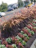 Mooie tuin dichtbij de weg royalty-vrije stock foto's