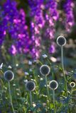 Mooie tuin een de zomerochtend Stock Foto