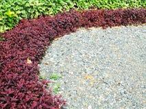 Mooie tuin, kleurenbladeren, rode en groene bladeren Royalty-vrije Stock Afbeelding