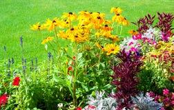 Mooie tuin met multicolored bloembed op een gazon Stock Afbeeldingen
