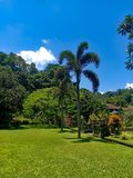 Mooie tuin tegen blauwe hemel en vlot groen gazon royalty-vrije stock foto's