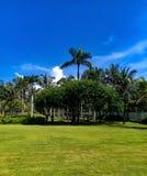 Mooie tuin tegen blauwe hemel en vlot groen gazon stock fotografie