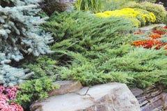 Mooie tuin van blauwe sparren stock foto