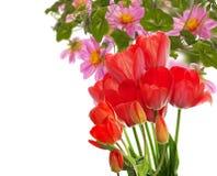 Mooie tuin verse rode tulpen Stock Foto