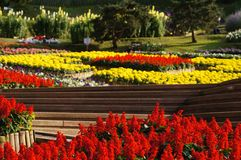 Mooie tuin in zonlicht, Chiang Rai, Thailand Stock Foto