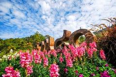 Mooie tuinbloem Royalty-vrije Stock Afbeeldingen