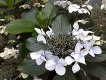 Mooie tuinbloem in Storkow in Duitsland stock afbeelding