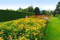 Mooie tuinbloemen, rubeckia, fulgida, goldsturm Stock Afbeelding