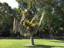 Mooie tuinbomen Royalty-vrije Stock Afbeelding