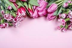 Mooie tulpen en anjers op roze achtergrond Royalty-vrije Stock Afbeeldingen