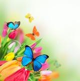 Mooie tulpen met exotische vlinders Royalty-vrije Stock Afbeeldingen