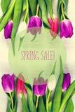 Mooie tulpen op witte boomachtergrond De verkoop van de conceptenlente Stock Foto's