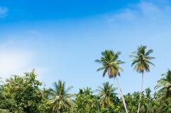 Mooie twee kokospalmenbomen in het Tropische bos met blauwe hemel bij Eiland Stock Afbeeldingen