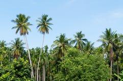 Mooie twee kokospalmenbomen in het Tropische bos met blauwe hemel bij Eiland Royalty-vrije Stock Foto's