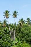 Mooie twee kokospalmenbomen in het Tropische bos met blauwe hemel bij Eiland Royalty-vrije Stock Fotografie