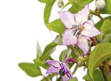Mooie Uiterst kleine Bloemen die op Wit worden geïsoleerdw Royalty-vrije Stock Afbeeldingen