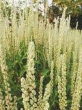 Mooie uiterst kleine witte bloemen royalty-vrije stock afbeeldingen