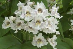 Mooie Uiterst kleine Witte Bloemen die onderaan een Boom stromen Royalty-vrije Stock Afbeelding