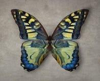Mooie uitstekende de textuurachtergrond van de vlindervertoning royalty-vrije stock foto's