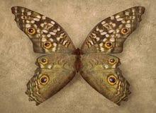Mooie uitstekende de textuurachtergrond van de vlindervertoning royalty-vrije stock foto