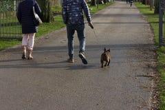 mooie unieke honden die een gang in stadspark hebben royalty-vrije stock foto