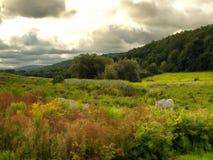 Mooie vallei Stock Afbeeldingen