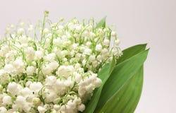 Mooie verse lelie-van-de-Vallei Stock Foto