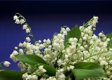 Mooie verse lelie-van-de-Vallei bloemen Royalty-vrije Stock Foto