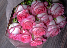 Mooie verse roze rozen royalty-vrije stock fotografie