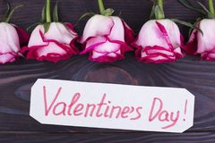 Mooie verse rozen voor Valentijnskaartendag Royalty-vrije Stock Afbeeldingen