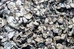 Mooie Verstarde Shells op de Rotsen royalty-vrije stock afbeelding
