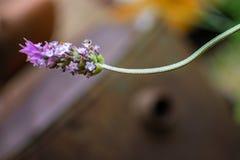Mooie violette bloem royalty-vrije stock afbeeldingen
