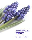 Mooie violette bloemen Stock Afbeeldingen