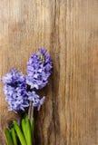 Mooie violette hyacintbloemen op houten achtergrond royalty-vrije stock fotografie