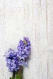 Mooie violette hyacintbloemen op houten achtergrond stock fotografie