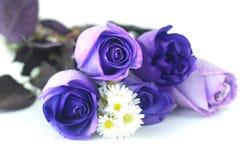 Mooie violette rozen en kamilles royalty-vrije stock fotografie