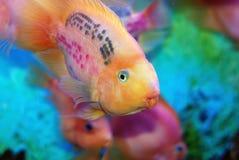 Mooie vissen Stock Afbeeldingen