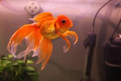 Mooie vissen in het aquarium stock foto