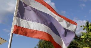 Mooie vlag Thailand tegen hemelpalmen stock videobeelden
