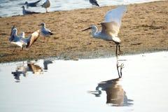 Mooie vliegende vogels op het strand royalty-vrije stock afbeelding