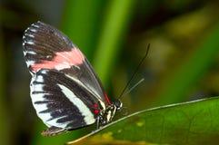 Mooie vlinder Royalty-vrije Stock Fotografie